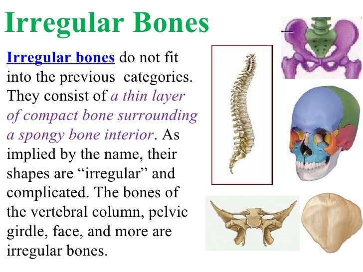 what is an example of a irregular bone
