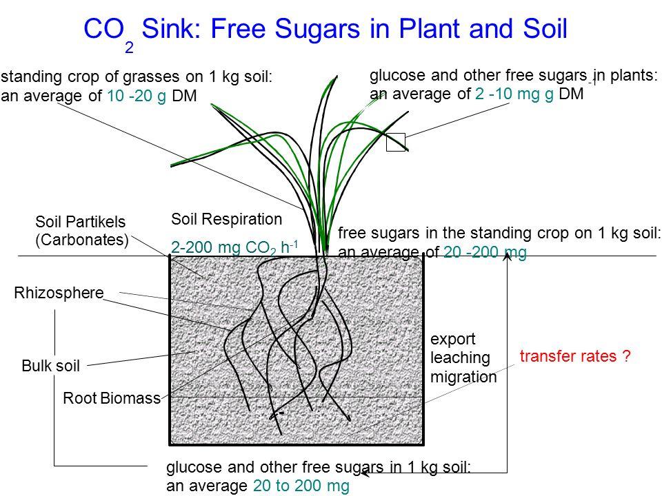 example of sugar sink in plants