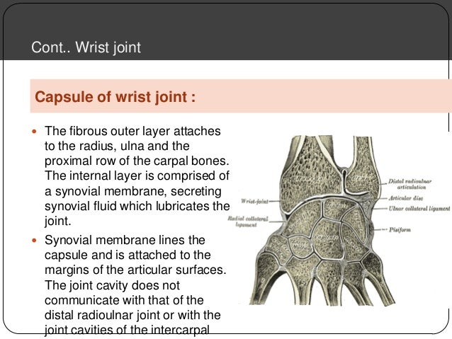 the wrist is an example of which type of joint
