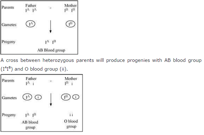 is the abo blood group an example of co dominance