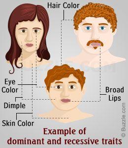 example of homozygous dominant genotype