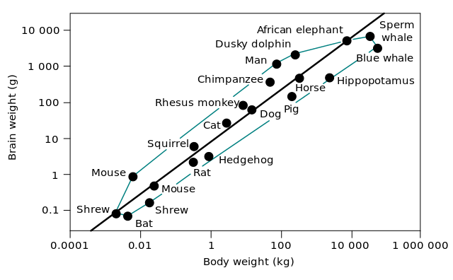 example of organ system evolution