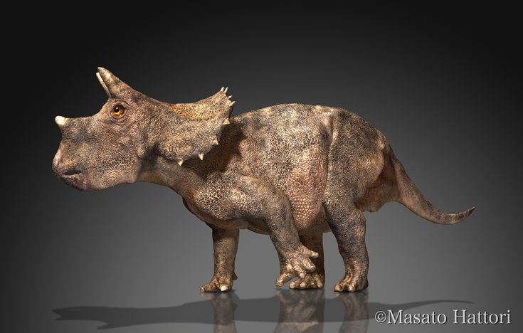 what is triceratops an example of